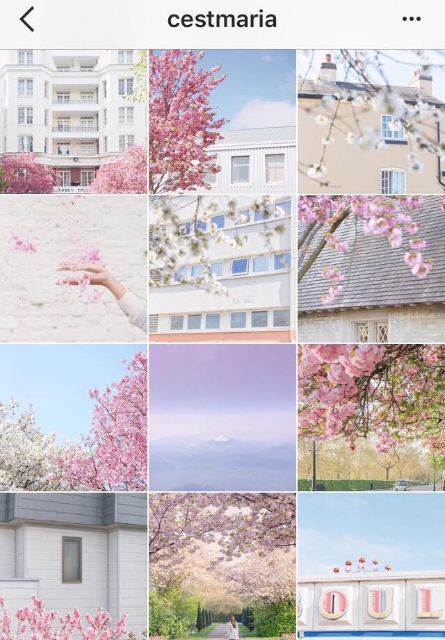 cestmaria seasonal theme color pink