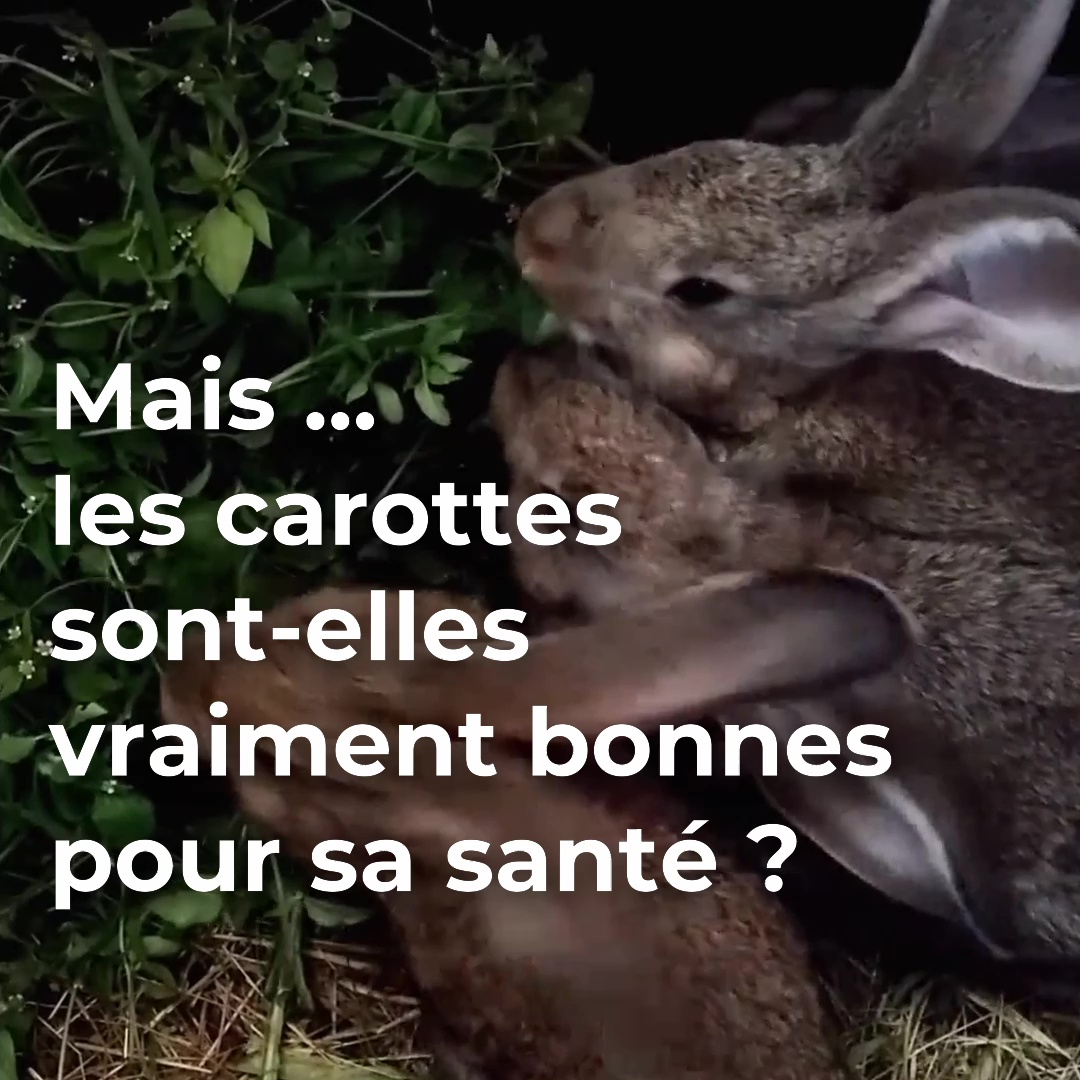 Format 30s sur l'alimentation du lapin