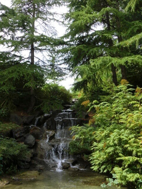 FirReal Nature Connections - Canada's first & only Certified Nature Connected Coach - nature walks - connected coaching with Melody Rose - Forest Bathing - Shamanic Practices - NCC - ACSTH - Chilliwack, British Columbia, Canada