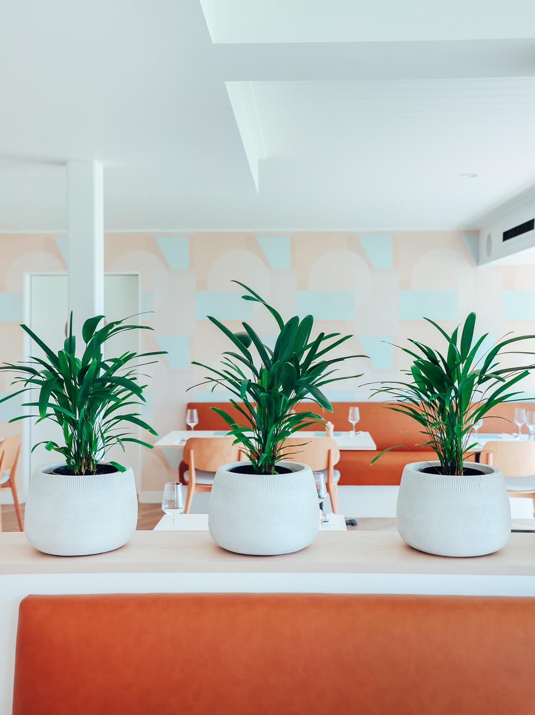Three pot plants sitting on a ledge in a restaurant.