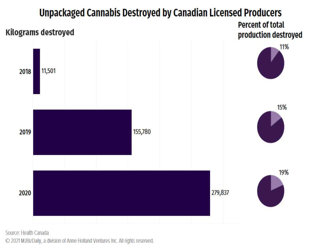 (This is the first installment in a series examining Canada's mountain of unsold cannabis.)