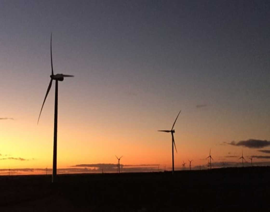 Wind turbines on a property near Merredin, Western Australia. An international consortium has selected a site in Australia's south-west to build the Western Green Energy Hub.