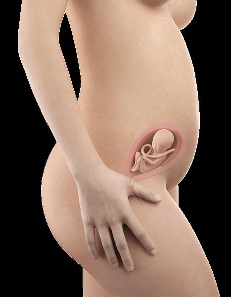 Schwangerschaftswoche 21