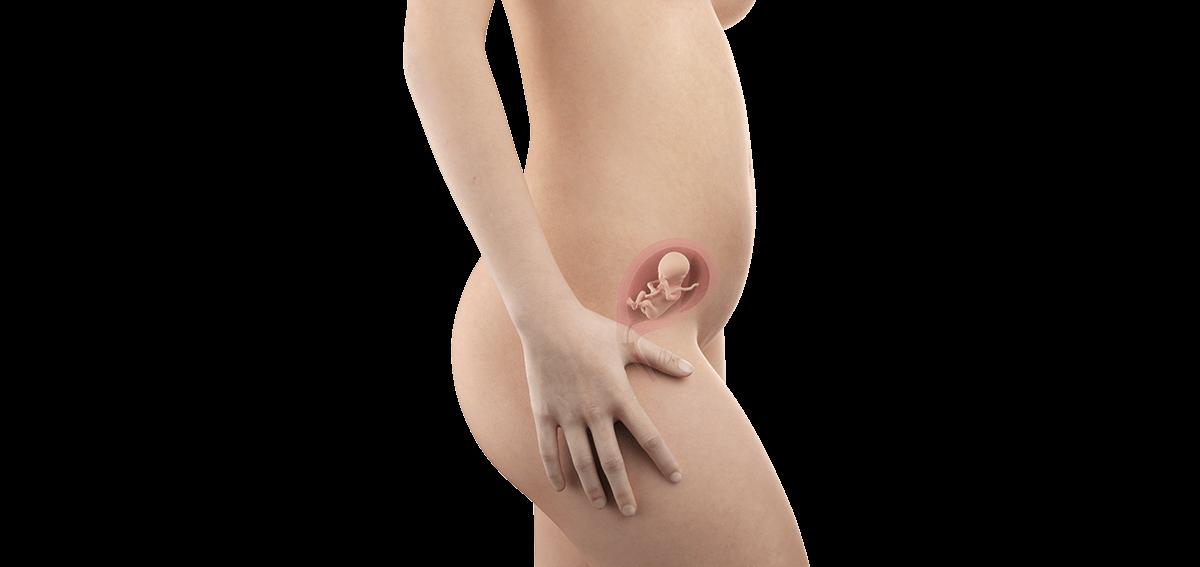 Schwangerschaftswoche 17