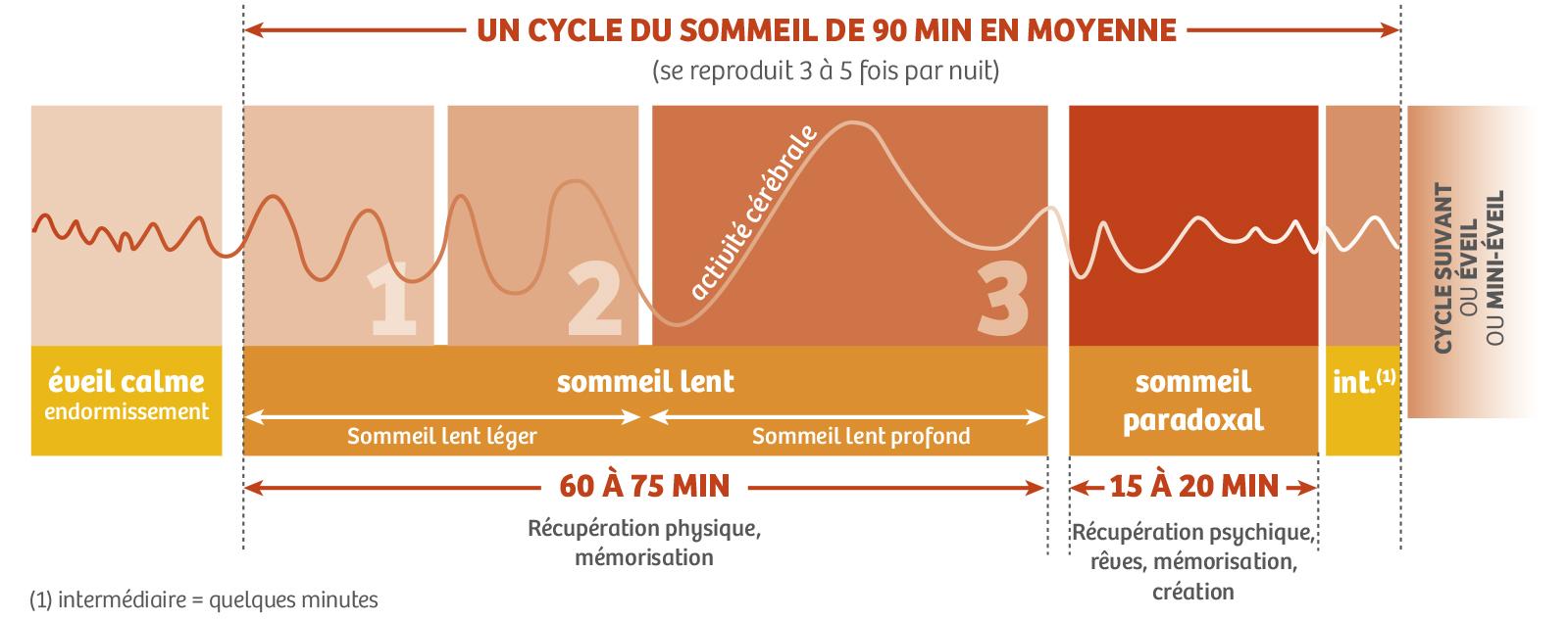 schéma d'un cycle du sommeil