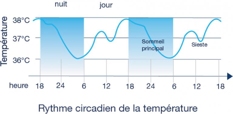 Graphique représentant les variations de température corporelle en fonction du rythme circadien