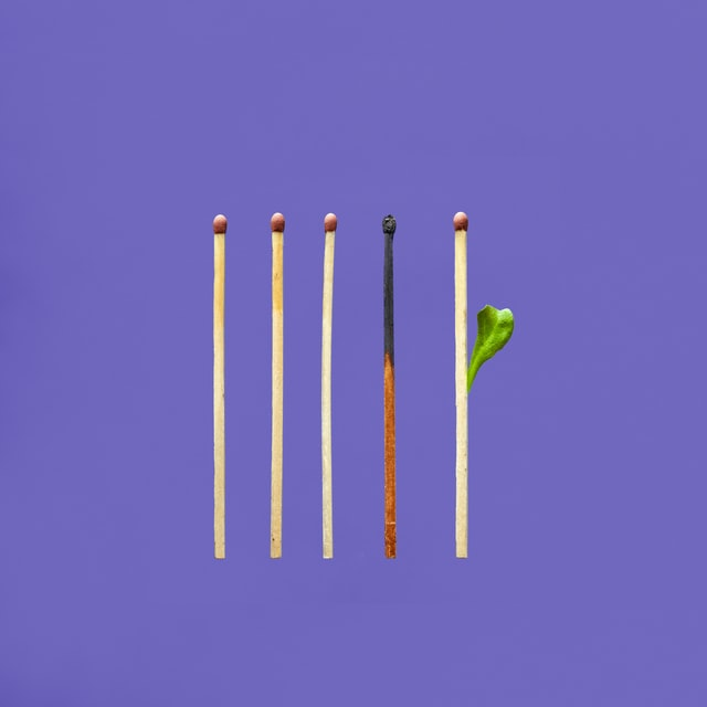 Five matches, the fourth from left is half-burnt, the fifth is new and has a leaf growing from it.