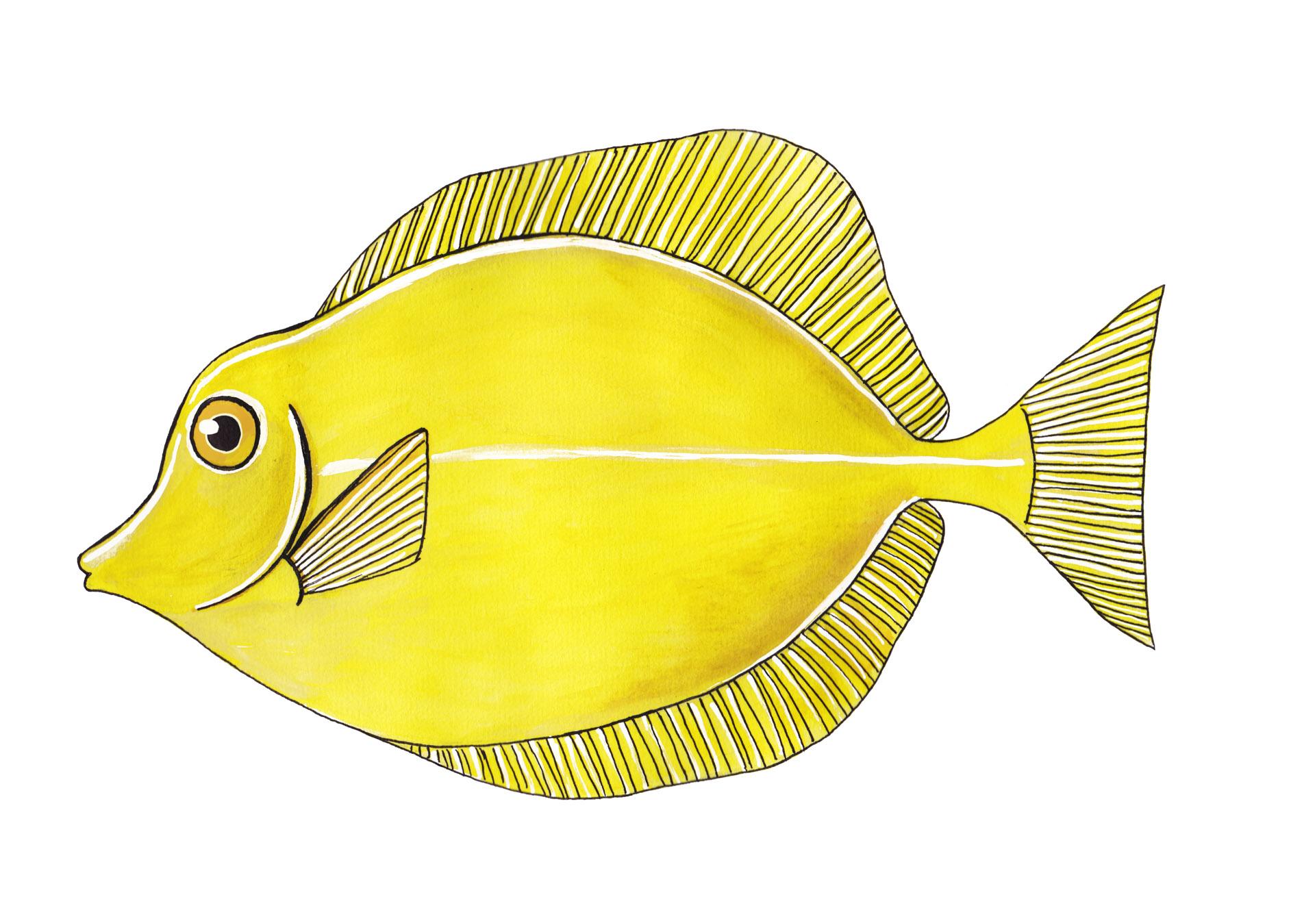 Gele Zijlvindoctorsvis
