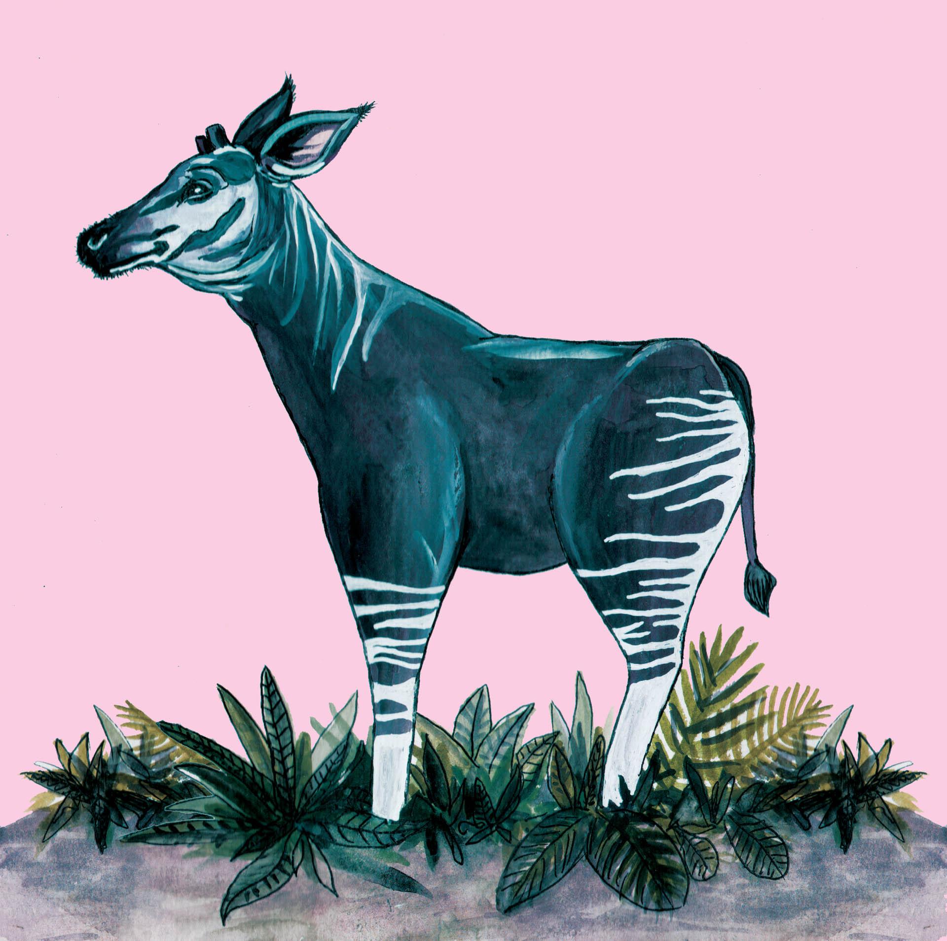 Blue Okapi