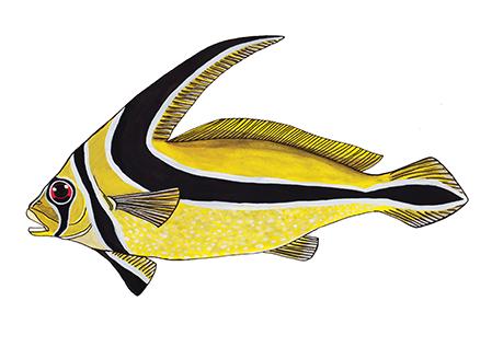 Riddervis