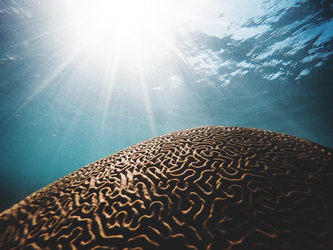 ¿Cómo funciona el cerebro? Reacciones instintivas y respuestas conscientes