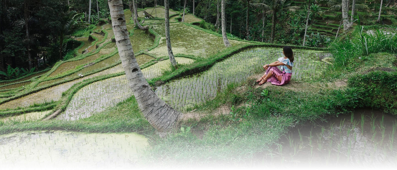 Planta árboles con Bambú