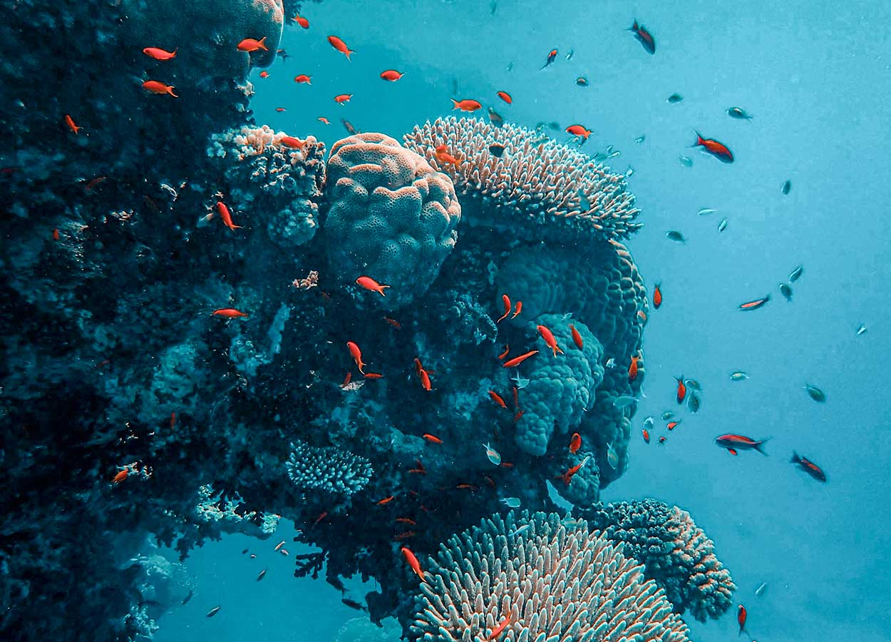 Branding vs graphic design coral reef analogy.