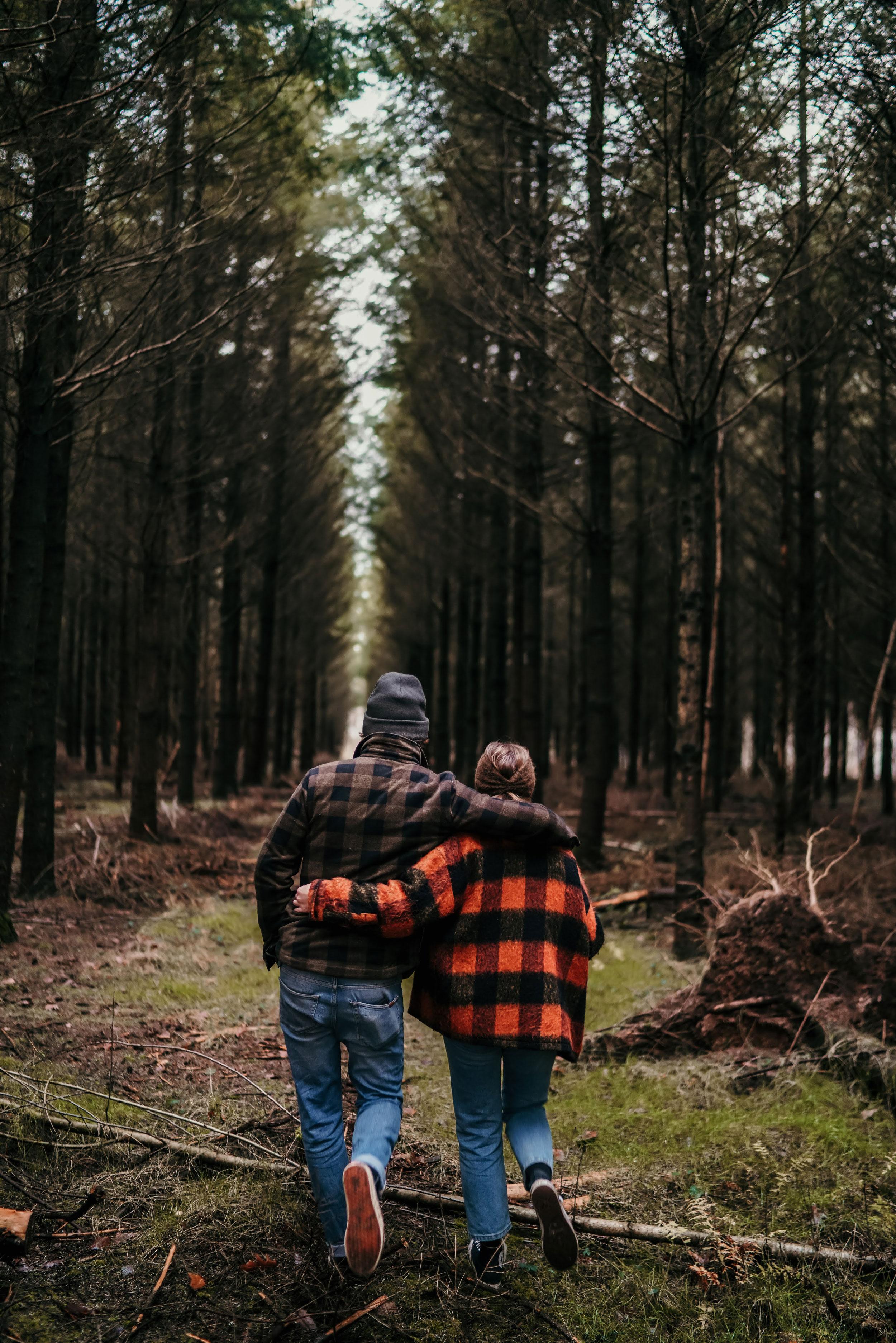 Balade dans les bois ecorce