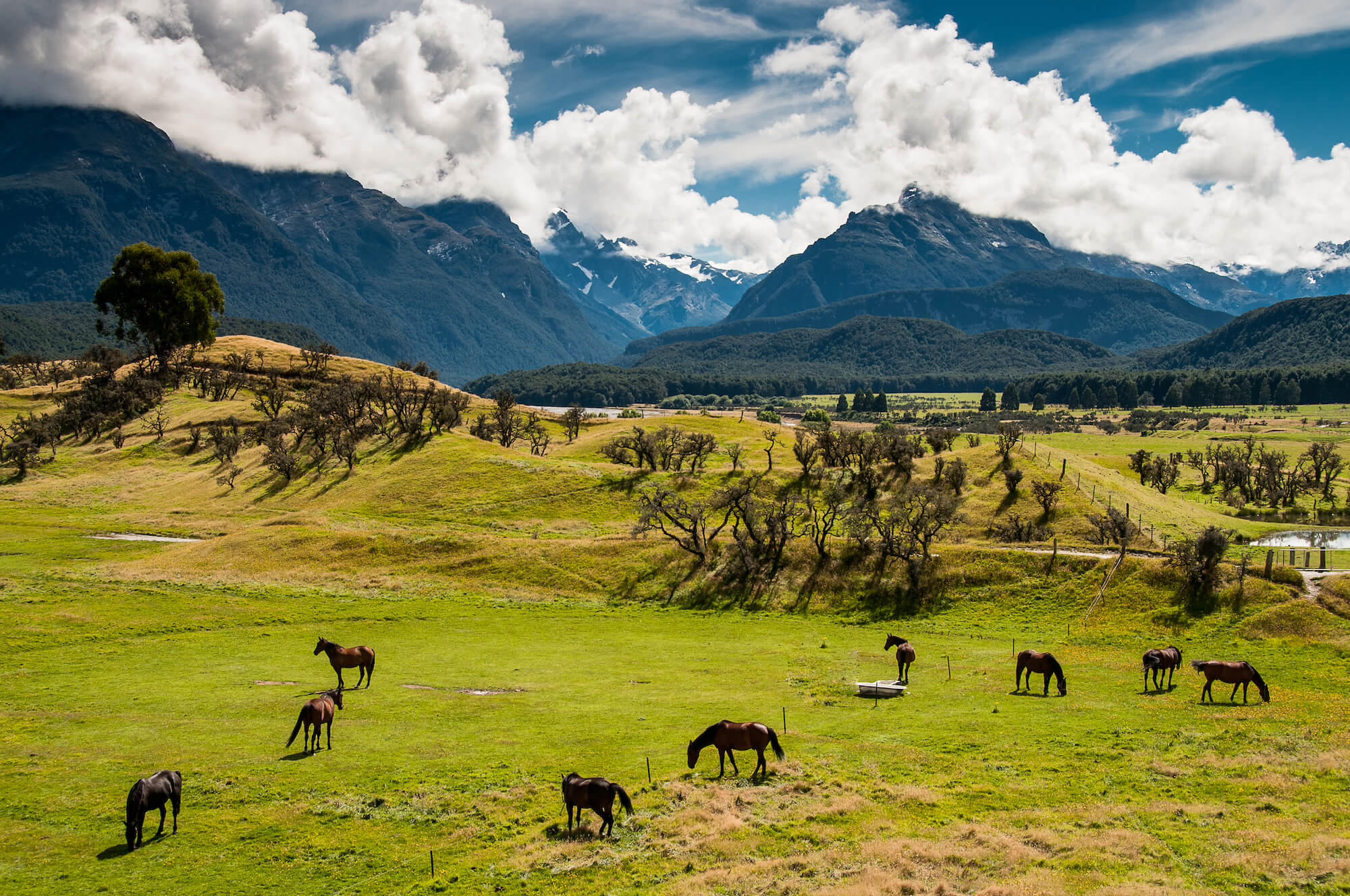 Animals at Paradise in Glenorchy