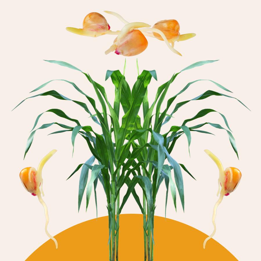 Sunkissed: Seed, Root, Stem, Leaf
