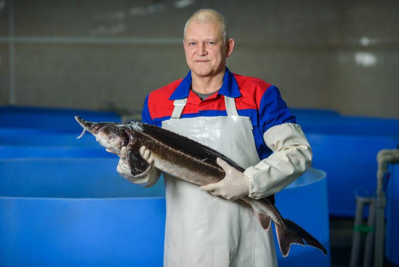 man holding sturgeon fish
