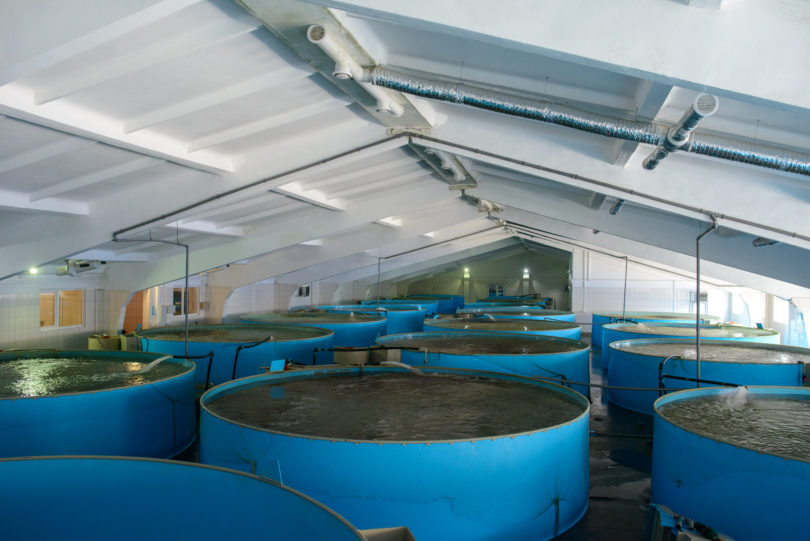 inside containers with fish