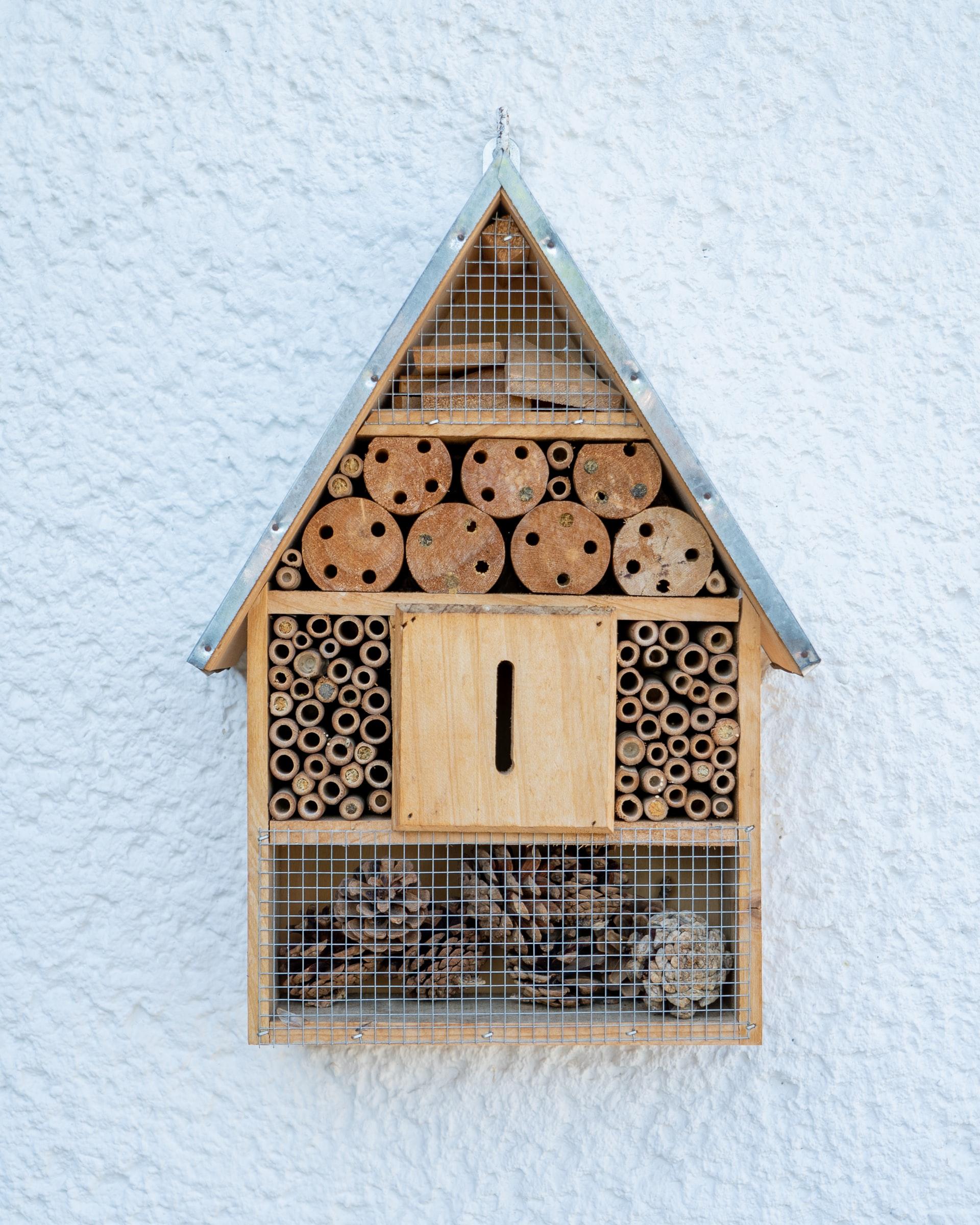 cabane à insectes