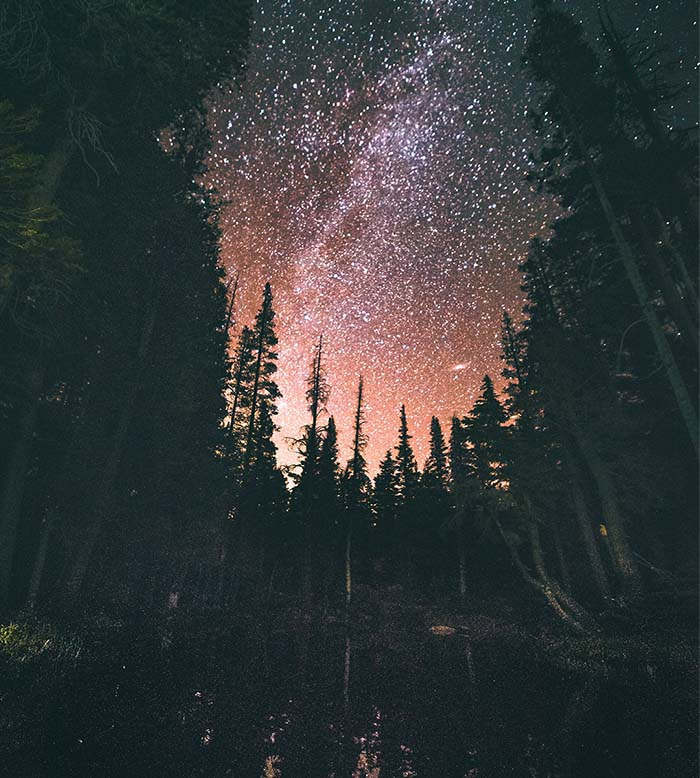 Stars shine through the forest of trees