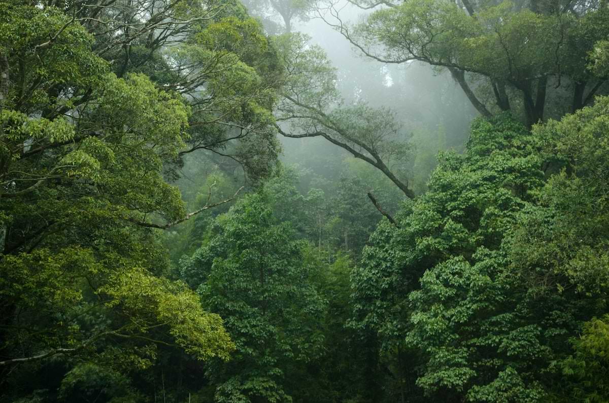 9 Gründe, warum jetzt klimastabiler Mischwald angesagt ist und was du über ihn wissen solltest