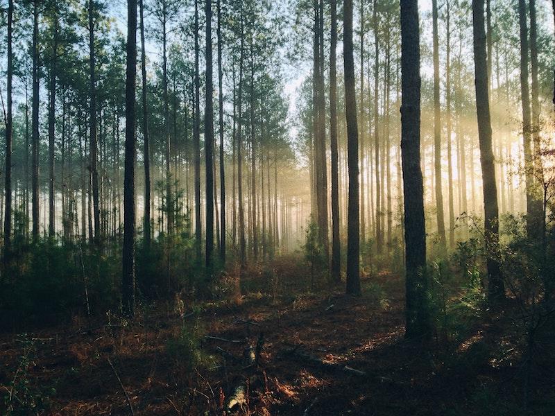 Einen Baum pflanzen: Was bringt es?