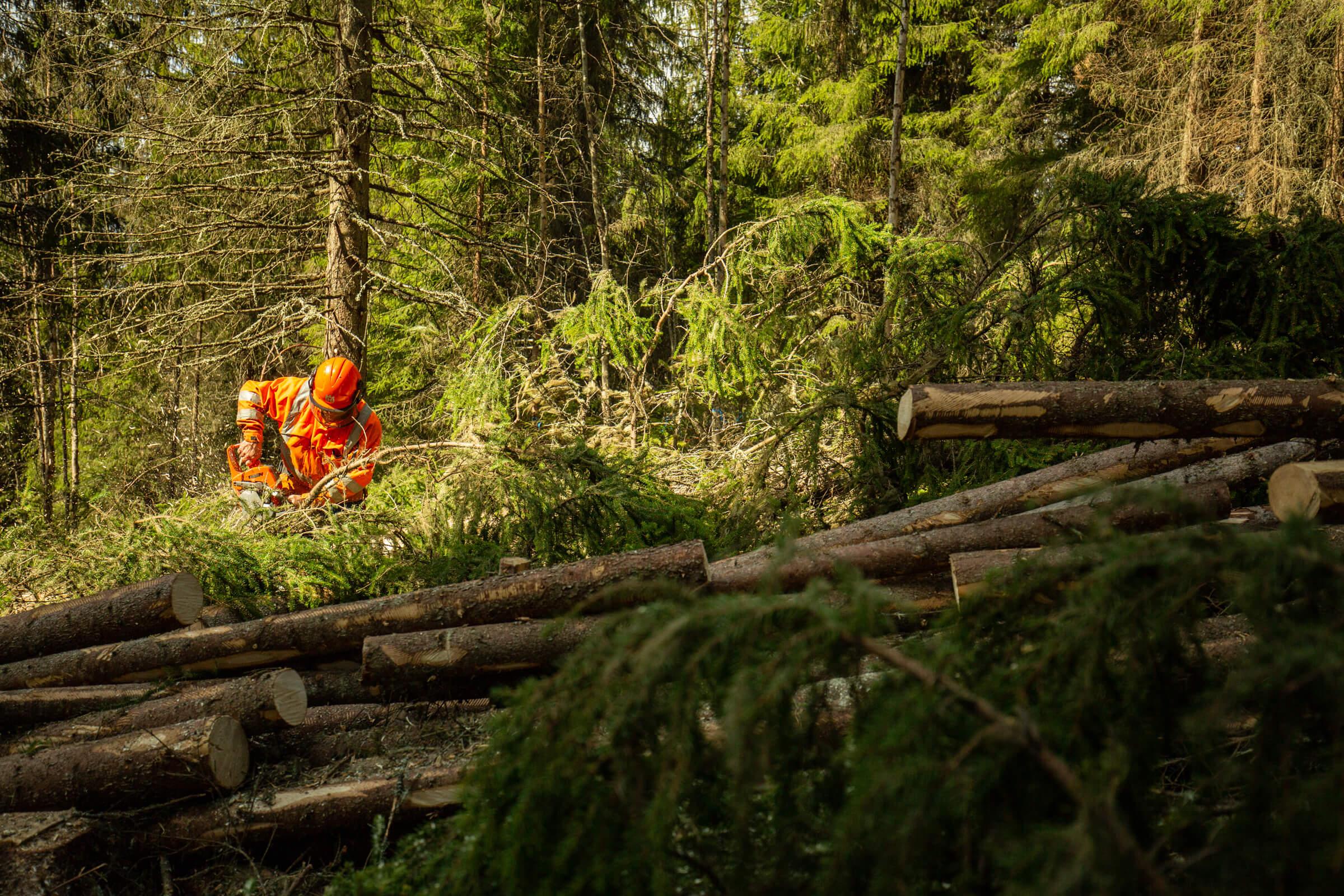 Åre Byservice - Trädfällning i Åre Kommun