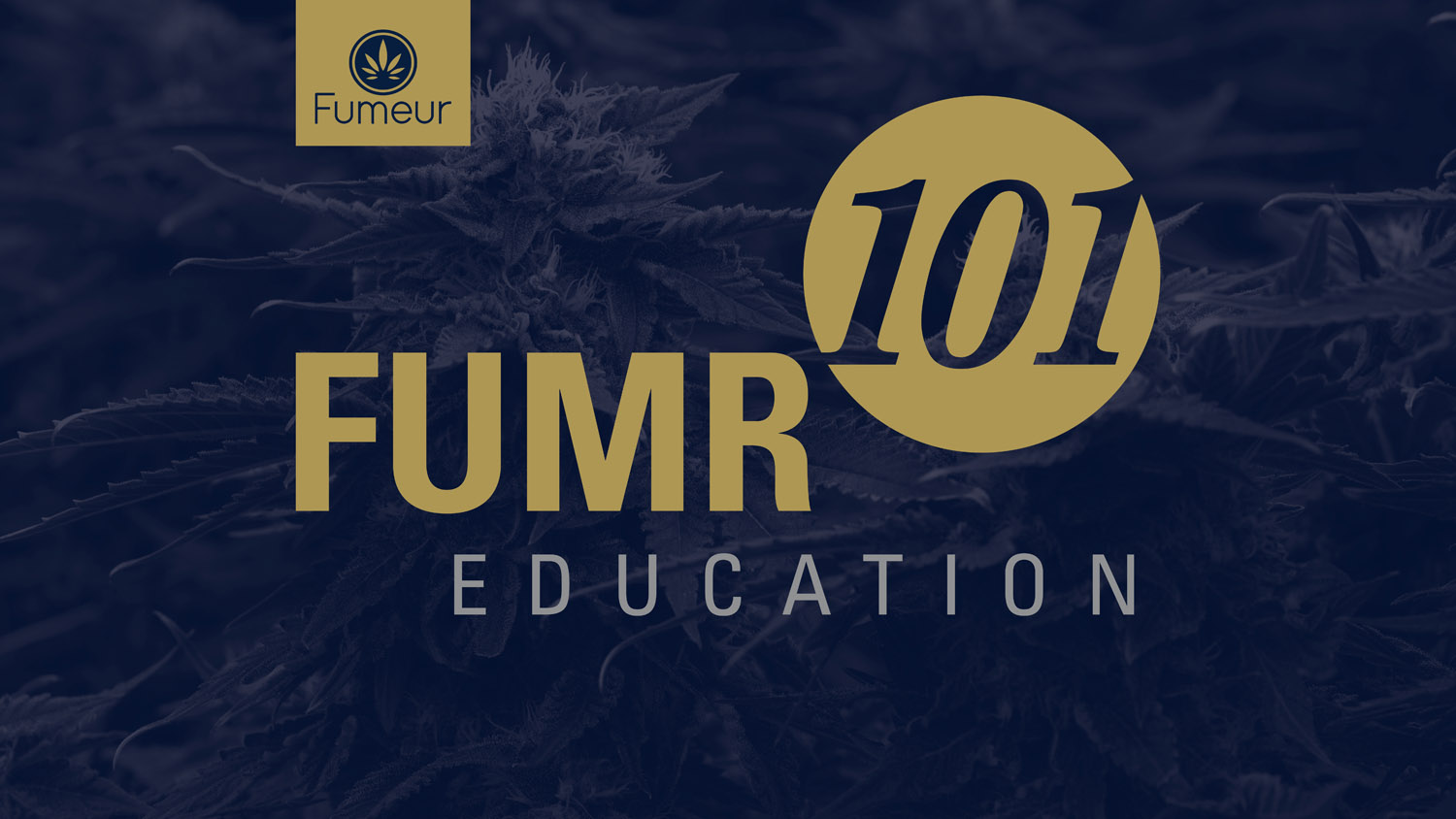 FUMR101 Education Logo in gold and navy blue