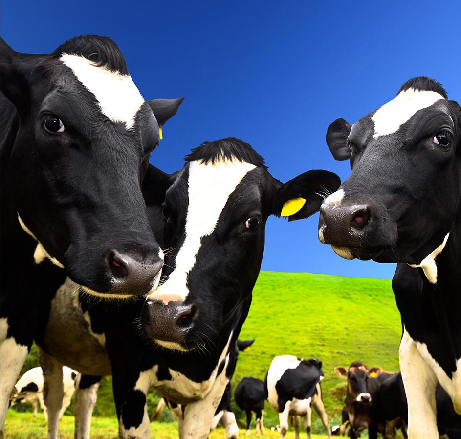 SSAFE GLOBAL DAIRY FARMING FOOD SAFETY TRAINING FRAMEWORK