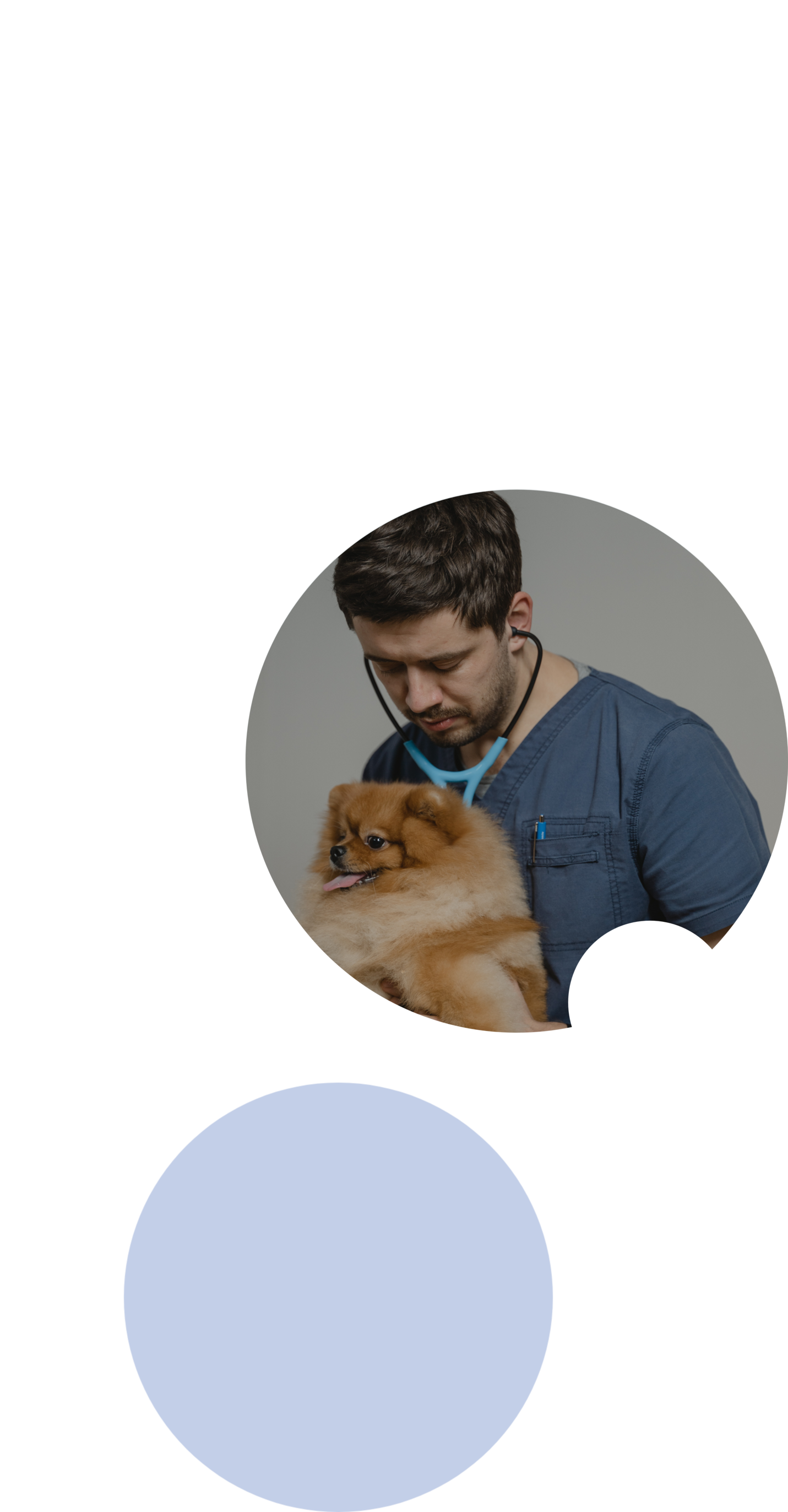 veterinary school admissions consulting