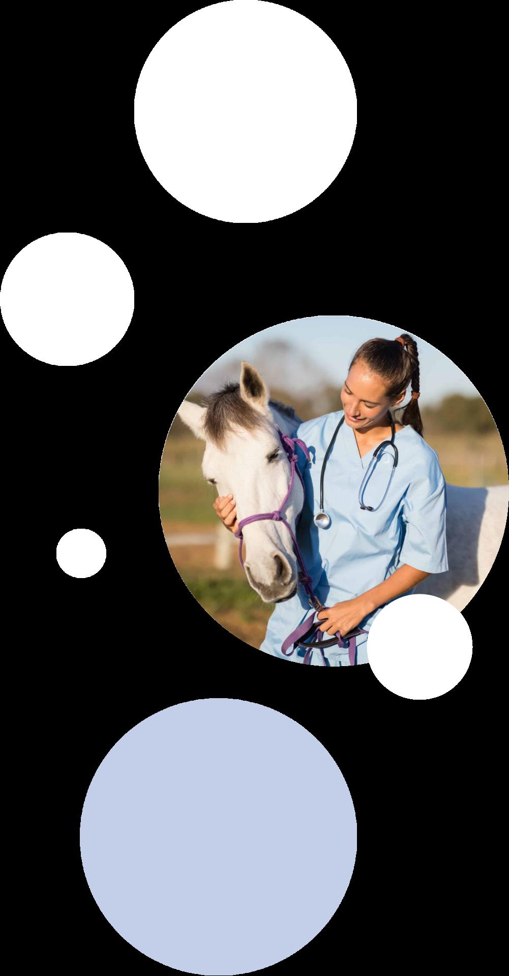 veterinary school application review