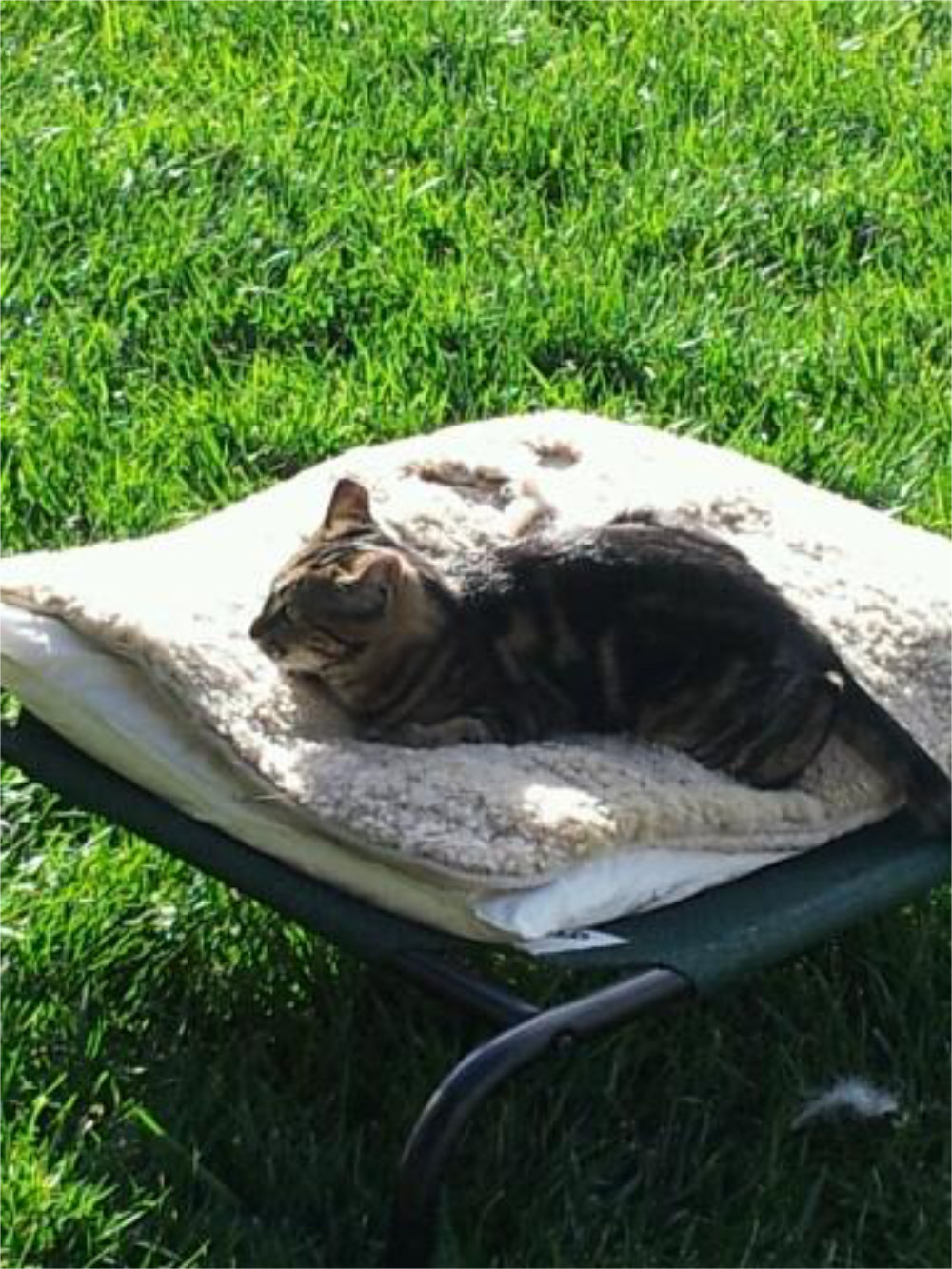 Cat asleep on a bed on grass