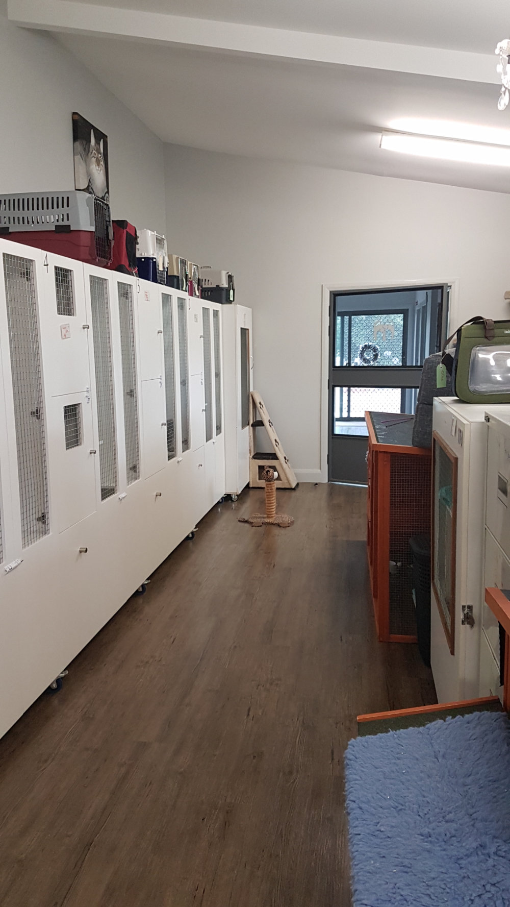 Cattery cat enclosures
