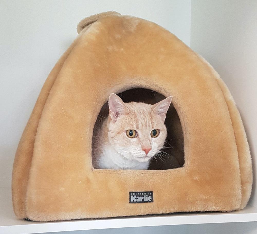 Cat in a cat bed