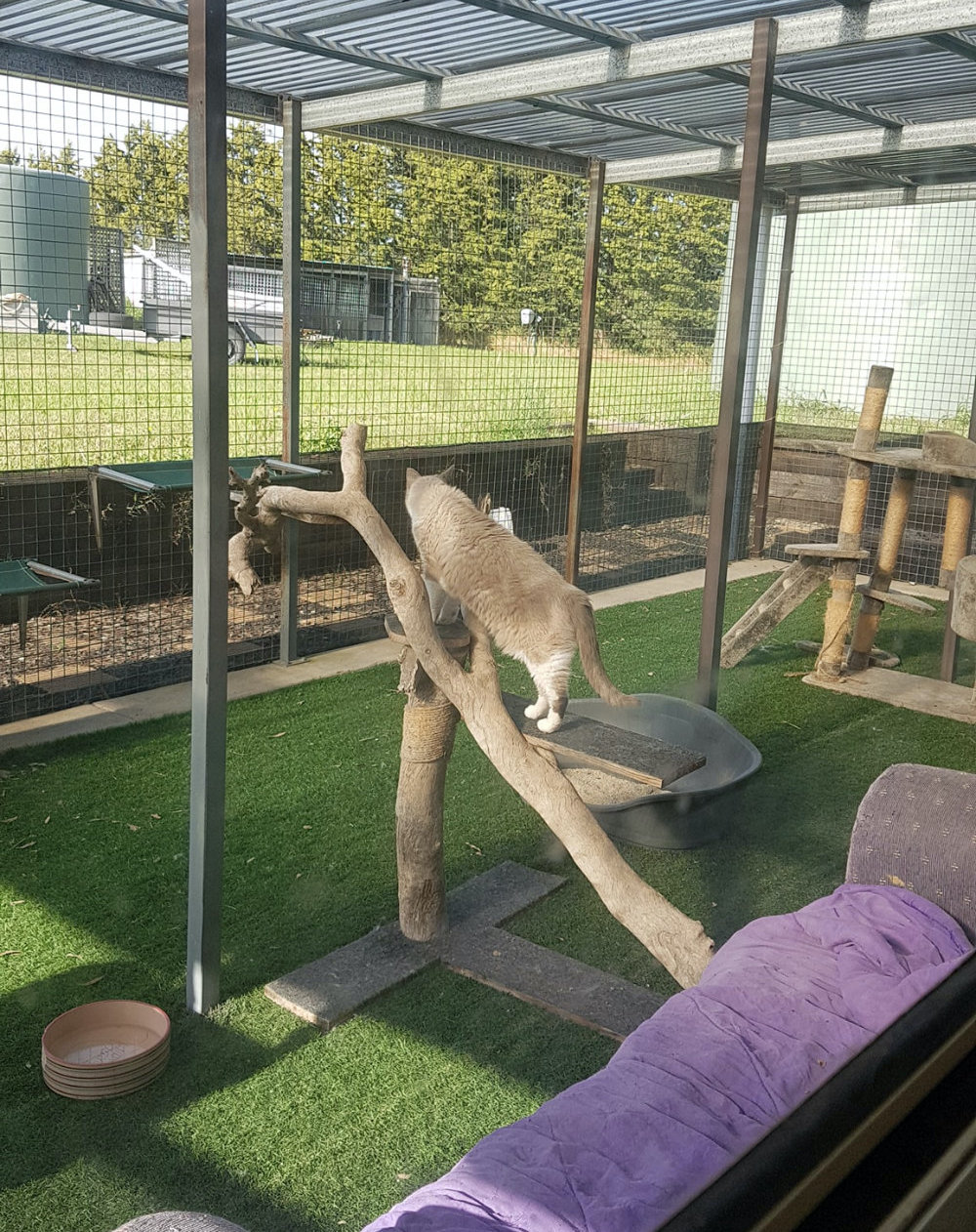 Cat in play enclosure