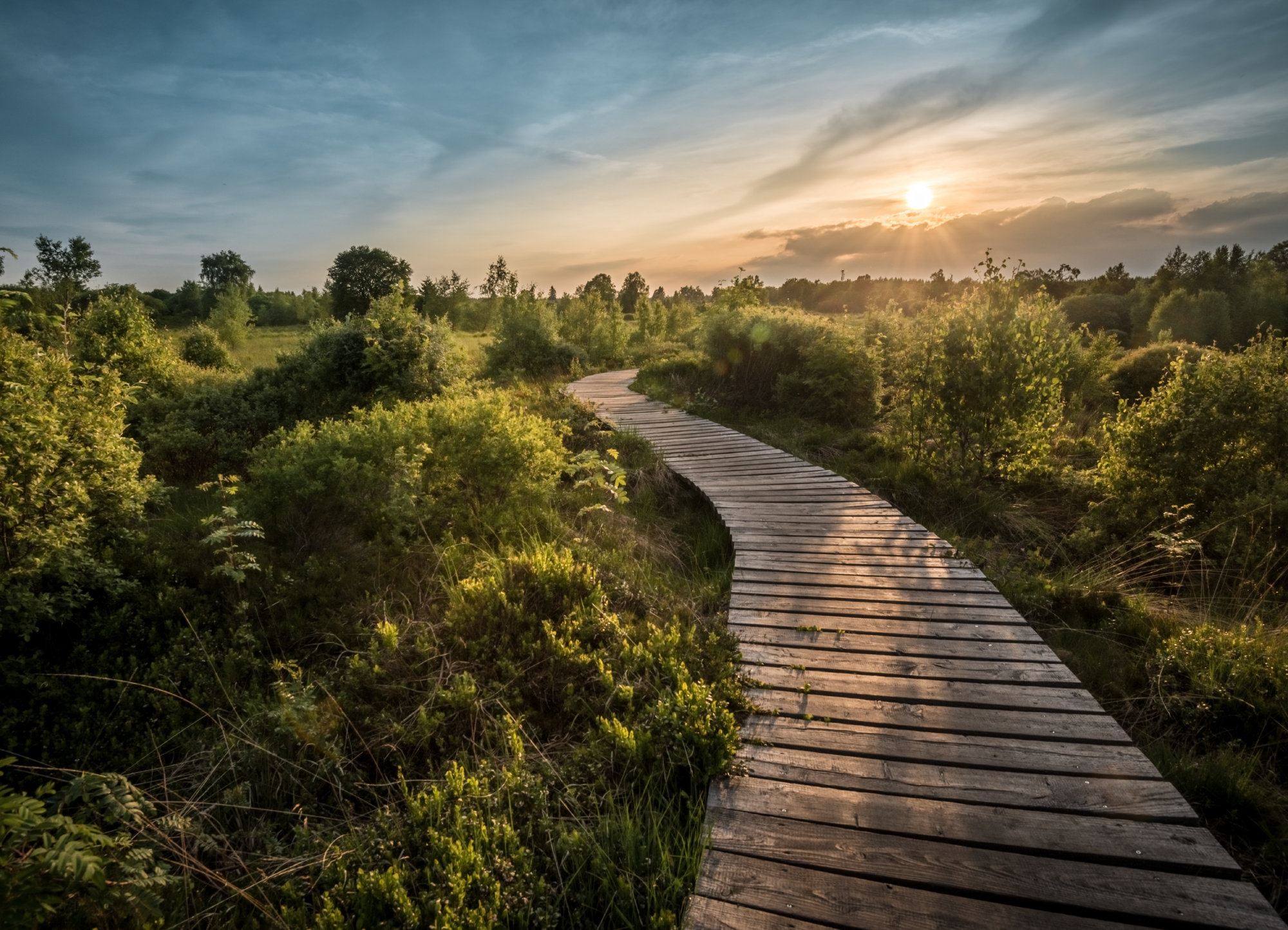 wooden path through a green landscape with the sun shining in the distance