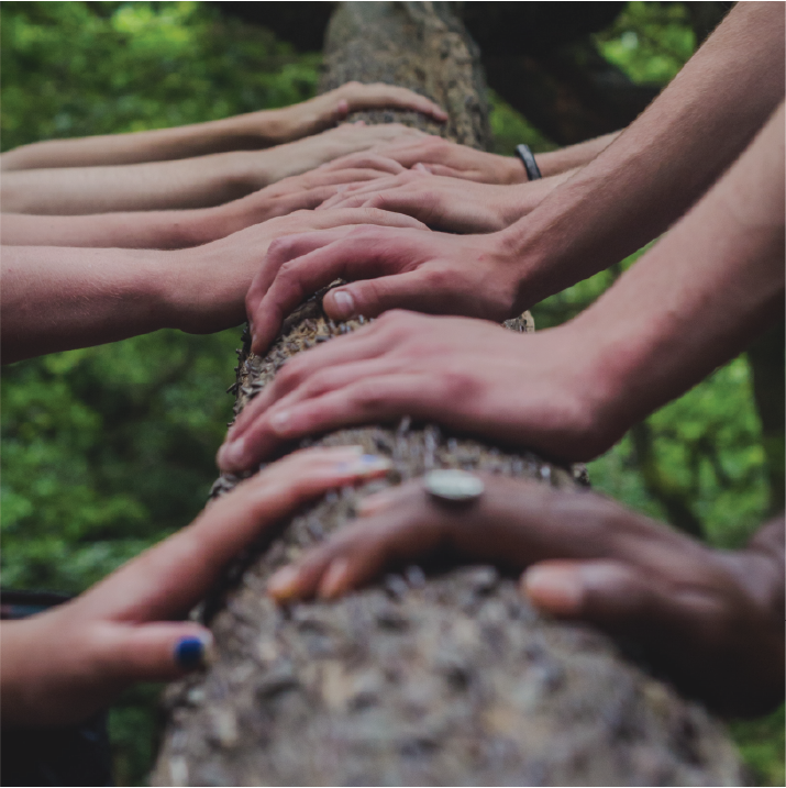 closeup of hands touching  a wooden log with green forest in the background