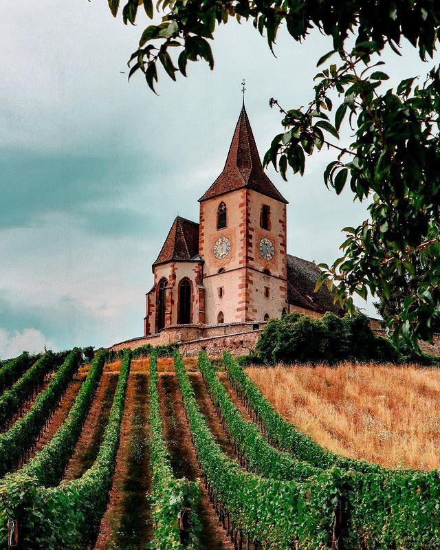 Eglise et vignes à Hunawihr en Alsace