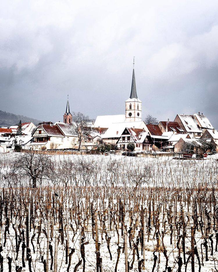 Mittelbergheim et ses vignobles