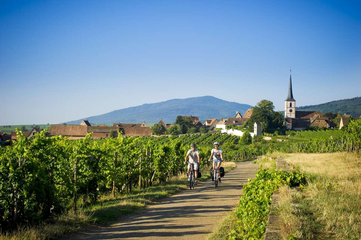 balade à vélo dans les vignobles