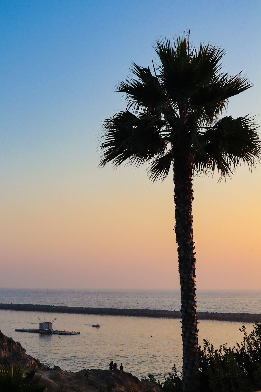 A palm tree by a California beach at sunset