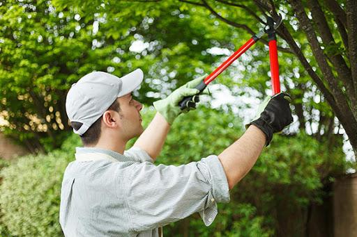 Professional arborist pruning a tree
