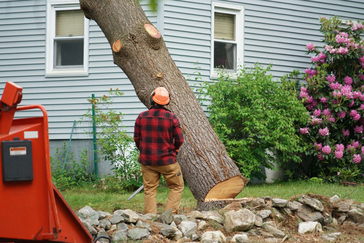Tree Removal service on a property