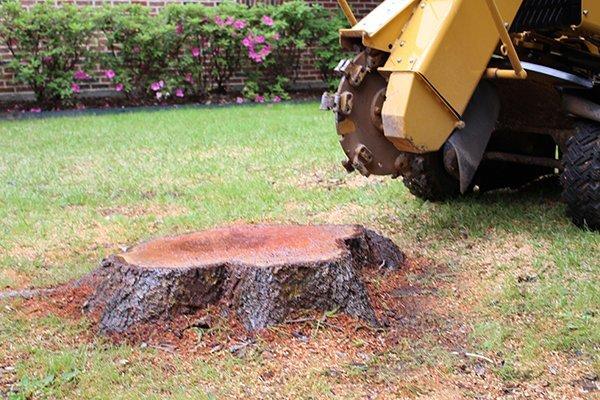 image of tree stump