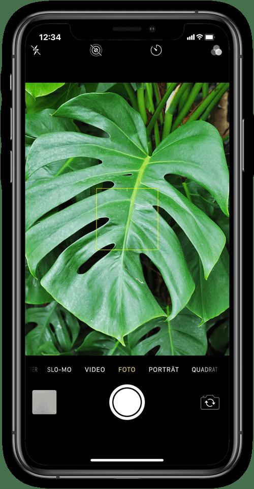 Neophyte Checker on Mobile