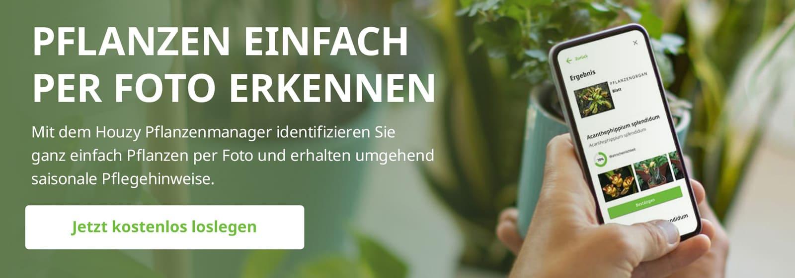 Houzy Pflanzenmanager - Pflanzen erkennen