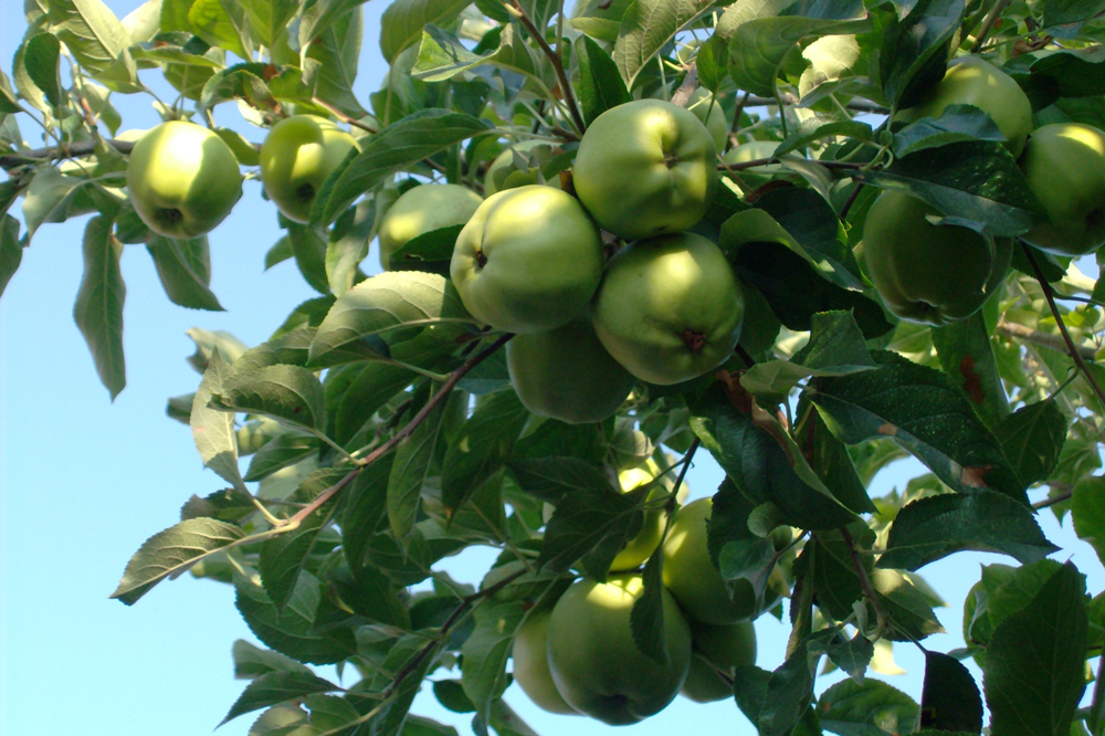 Bäume bieten natürlichen Sonnenschutz