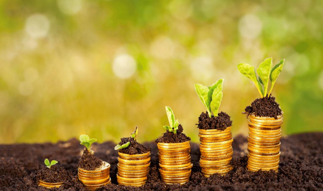 Money growing in soil