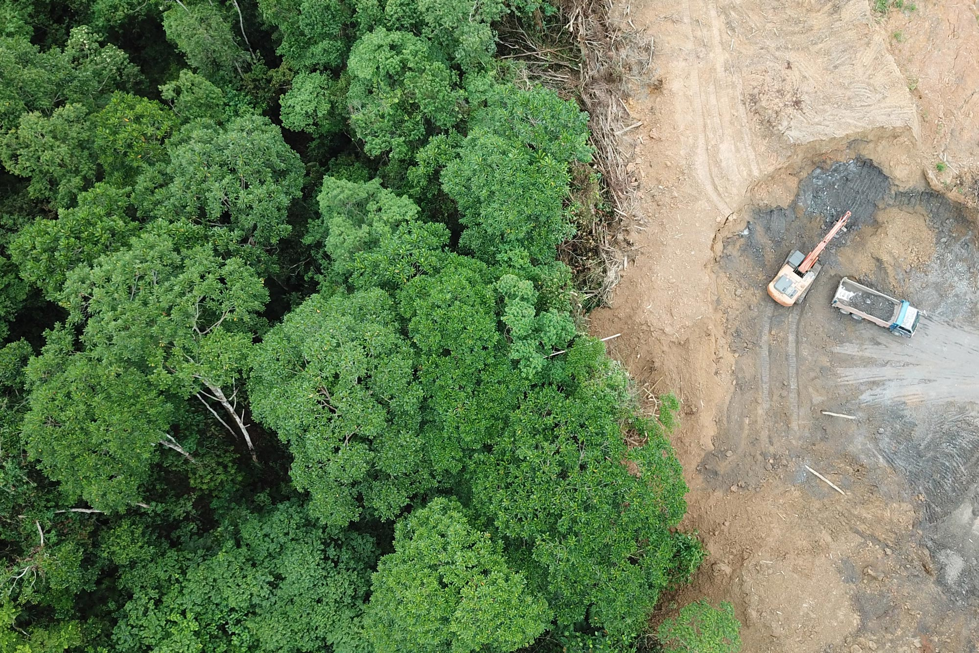 Rainforest where deforestation is getting closer step by step | Delicious Data