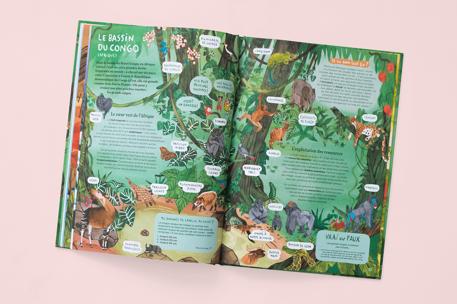 Kids' book open on an illustration of the Congo rainforest